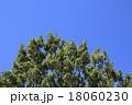 クヌギと青空 18060230