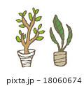 観葉植物 18060674