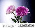 和花 18063639