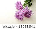 和花 18063641