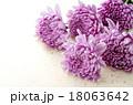 菊 花 植物の写真 18063642