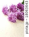 菊 花 植物の写真 18063643