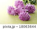菊 花 植物の写真 18063644