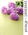 菊 花 植物の写真 18063645