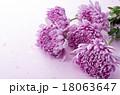 和花 18063647