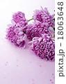 菊 花 植物の写真 18063648