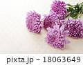 和花 18063649