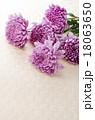 菊 花 植物の写真 18063650