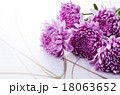 菊 花 植物の写真 18063652