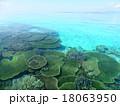 珊瑚 18063950