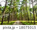 樹木 樹 ツリーの写真 18075015