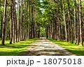 樹木 樹 ツリーの写真 18075018