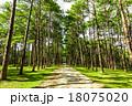 樹木 樹 ツリーの写真 18075020