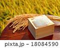 農業、稲穂(イネ・お米・農作物)イメージ。 18084590