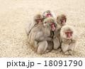 猿ファミリー 家族 さる団子 小豆島観光 18091790
