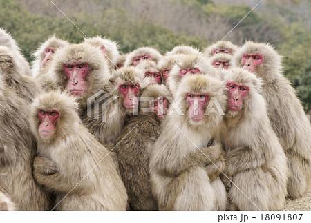 猿だんご 小豆島観光 サル団子 ...