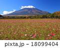 コスモス 青空 花畑の写真 18099404