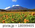 向日葵 青空 花畑の写真 18099405
