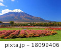 青空 花畑 富士山の写真 18099406