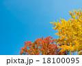 秋の森 18100095