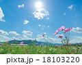 太陽とコスモス 18103220