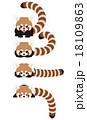 レッサーパンダ 動物 キャラクターのイラスト 18109863