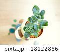 多肉植物 mini-3 18122886