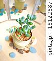 多肉植物 mini-4 18122887