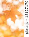 モミジバフウ 紅葉 モミジの写真 18127170