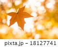 モミジバフウ 紅葉 モミジの写真 18127741