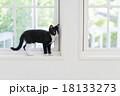 窓際にたたずむ猫 18133273