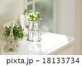 窓辺の観葉植物 18133734