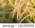 稲 稲穂 穀物の写真 18136998