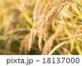 稲 稲穂 穀物の写真 18137000
