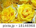 黄色いバラ 18146968