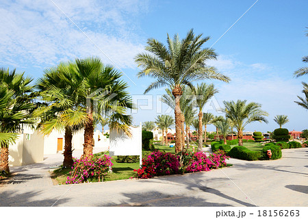 The villas at the luxury hotel, Hurghada, Egypt 18156263