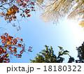 秋色の縁どり-A 18180322