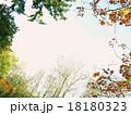 秋色の縁どり-B 18180323