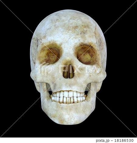 骸骨のイラスト素材 [18186530] ...
