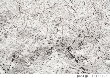 冬, 木に降り積もる雪 18188502