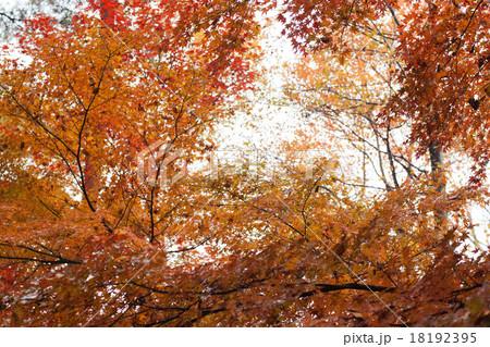 紅葉, 秋の風景 18192395