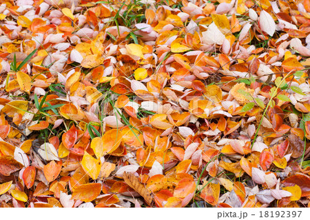 落ち葉, 秋の風景 18192397