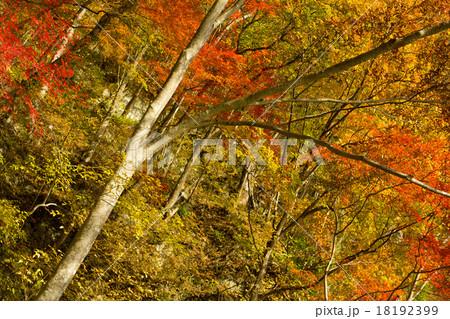 紅葉, 秋の風景 18192399
