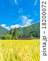 秋の白川郷【稲穂と合掌造り集落】 18200072