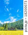 白川郷 田んぼ 合掌造り集落の写真 18200073