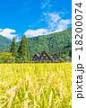 白川郷 田んぼ 合掌造り集落の写真 18200074