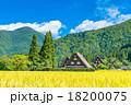 秋の白川郷【稲穂と合掌造り集落】 18200075