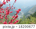 里山 風景 梅の写真 18200677