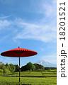 富士山 和傘 茶畑の写真 18201521