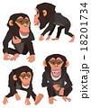 チンパンジー 18201734